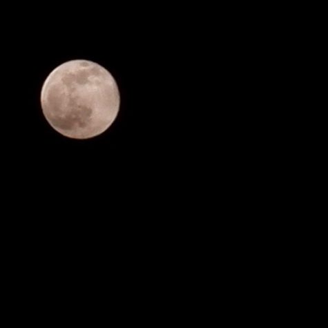 Photo submitted by Rachel Beddes. A clear night sky provides a wonderful backdrop to this breathtaking shot of the moon. Beddes discovered the joy of capturing night photos with her phone over Spring Break.
